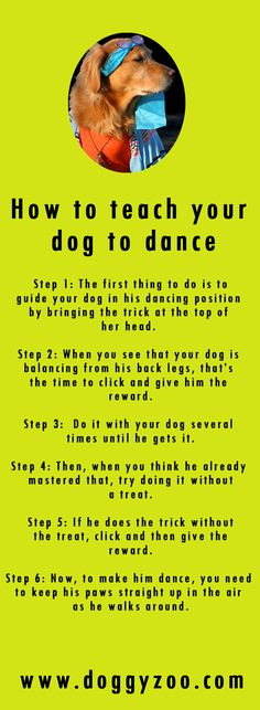 How to teach your dog to dance