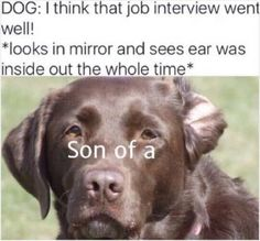 """33 Amusing Memes For The Apathetic - Funny memes that """"GET IT"""" and want you to too. Get the latest funniest memes and keep up what is going on in the meme-o-sphere. Funny Dog Fails, Funny Dog Memes, Funny Animal Memes, Funny Animal Pictures, Funny Dogs, Funny Animals, Funniest Memes, Dog Pictures, Funny Quotes"""