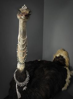 Taxidermy Ostrich with pearl necklaces.