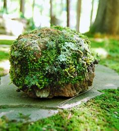Moss & lichen ball