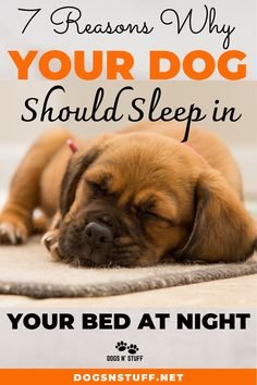 Here are the top benefits of letting your dog sleep with you in the night! Dog Psychology, Wild Animals Pictures, Pet Fox, Dog Rules, Dog Hacks, Sleeping Dogs, Dog Behavior, Training Your Dog, Dog Care