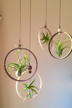 mixed air plant set gift idea hanging Tillandsia door terrarium Airplants display indoor wooden planter factory shed wall hang Air Plant Display, Diy Plant Stand, Plant Decor, Plant Stands, Types Of Air Plants, Air Plants Care, Hanging Plant Wall, Hanging Air Plants Diy, House Plants Hanging