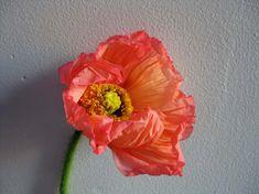 poppy from nicolette of nicolette   via http://www.designsponge.com  camille 10_ruffle