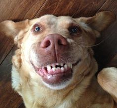 These dogs just love showing teef. Derpiness abounding.