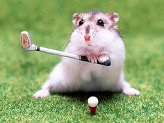"""OMG, so cute.  Peanut here is credited for inventing the phrase """"miniature golf."""""""