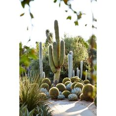Huntington Gardens ❤ liked on Polyvore featuring pictures