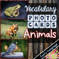 Teach animal related nouns using REAL PICTURES with these engaging photo flashcards!