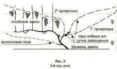 http://www.nrose.ru/images/vino10.jpg