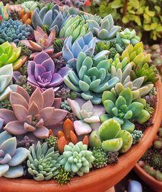 1252 Best Endless Succulent Ideas Images Succulents Succulents