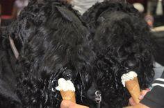 "Kennel of Black Russian Terrier ""Zolotoy Grad"" - Photo gallery Standard Schnauzer, Giant Schnauzer, Black Russian Terrier, Two Dogs, Samoyed, Terriers, Dog Breeds, Photo Galleries, Gallery"