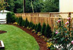 Arborvitaes privacy screen.around fence