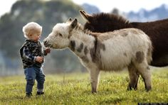 mini donkey | 15-month-old Jack Johnston plays with micro miniature donkeys called ...