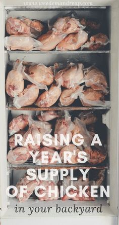 Raising Meat Chickens: How we grew a Year's Supply www.weedemandreap… Raising Meat Chickens: How we Chicken Coop Plans, Building A Chicken Coop, Diy Chicken Coop, Freezer Chicken, Chicken Tractors, Chicken Feeders, Chicken Barn, Raising Meat Chickens, Keeping Chickens