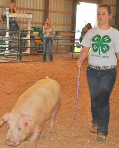 Callie during the Washington County 4-H Swine Show.