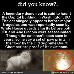 A legendary demon cat is said to haunt the Capitol Building in Washington, DC. The cat allegedly appears before major tragedies and was reportedly seen by White House guards shortly before both JFK and Abe Lincoln were assassinated. Though the cat. Wow Facts, Wtf Fun Facts, Random Facts, Funny Facts, Movie Facts, Did You Know Facts, Things To Know, Scary Things, The More You Know