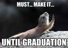 graduation memes - Google Search