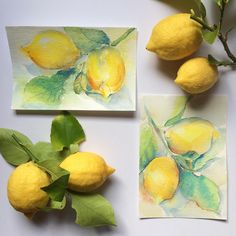 The box of lemons is back and this time there were few with the leaves attached, so I couldn't resist grabbing some to paint. This little paintings aren't as successful as the first one, but this only means that I'll have to try again. I also see some lemon poppy-seed muffins in my future. Жизнь предлагает лимоны - рисую лимоны, а потом сделаю лимонно-маковые кексы. Winsor & Newton watercolours on Daler-Rowney #watercolour #postcard. #акварель #рисуйкаждыйдень #рисунок #лимон #lemon #Wins...