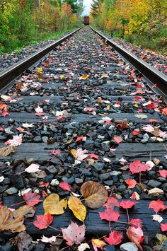 Abandoned Railroad Tracks Upper Peninsula Michigan, via Flickr.