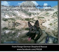 Front Range German Shepherd Rescue's photo.