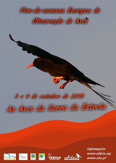 Casa das Fontinhas: Observação de Aves - Serra da Estrela