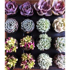 Succulent Plants - 30 Party Pack For Terrariums, Wedding, Favors,... (€80) ❤ liked on Polyvore featuring home, home decor, floral decor, photos, pictures, hand bouquet, succulent centerpieces, succulent terrarium, succulent plant terrarium and succulent planter