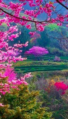 Hermoso paisaje!