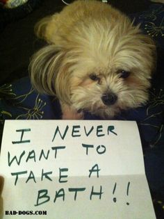 I never want to take a bath! #dogshaming #baddogs