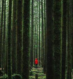 Golden Ears Provincial Park,  British Columbia,  Canada.  #loveletters #love #life #nature #landscape #travel #canada #naturephotography #naturelovers #photooftheday #photography #travelphotography #traveller #travelgram #instagood #instadaily #instaphoto #instanature #instatravel #instacool #adventure #happiness #fun #explore #wanderlust #motivation