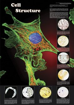The Cell Structure of Animal and Plant Cells - Biology Poster, 36x26""