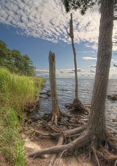 wetlands, Roanoke Sound, Nags Head, North Carolina