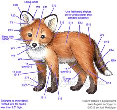 Fox Cub Coloring Guide by Crafts - Cards and Paper Crafts at Splitcoaststampers