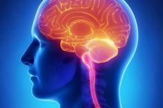 Células cerebrais se assemelham a um pequeno universo | #CélulasCerebrais, #Conexões, #Distribuição, #HenryJom, #Neurônios, #TaraMacIsaac, #Universo
