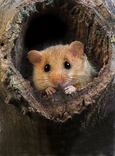 """""""I say, Tommy Tittlemouse. Stop that and begin worse."""" (15.1984-1985)"""