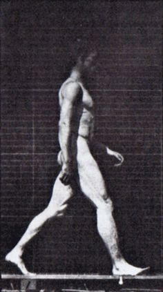 Eadward Muybridge human male walking