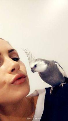LOST COCKATIEL: 17/03/2017 - Surfers Paradise, Queensland, QLD, Australia. Ref#: L29111 - #ParrotAlert #LostBird #LostParrot #MissingBird #MissingParrot #LostCockatiel #MissingCockatiel