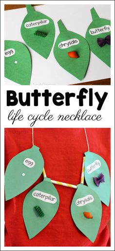 Butterfly Life Cycle Craft Necklace - Fun-A-Day! Butterfly Life Cycle Craft Necklace - Fun-A-Day! A twist on the traditional butterfly lif. Kindergarten Science, Preschool Activities, Science Classroom, Insect Activities, Life Cycle Craft, Theme Nature, Insect Crafts, Butterfly Life Cycle, Hungry Caterpillar
