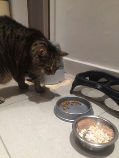 Lord Leo follow his diet