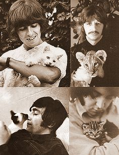 George, Ringo, John, and Paul. And kitties.  I hear my childhood filled with Beatles music and kitty cats. Love, love, love.