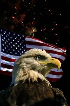 Patriotic Eagle with Fireworks American Flag Wallpaper, Eagle Wallpaper, American Flag Eagle, American Freedom, American Spirit, Eagle Images, Eagle Pictures, Military Pictures, Patriotic Pictures