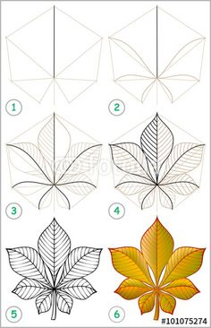 """""""Page shows how to learn step by step to draw a chestnut leaf. Developing children skills for drawing and coloring. Vector image."""" fichier vectoriel libre de droits sur la banque d'images Fotolia.com - Image 101075274"""