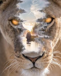 Caracal Cat, Tiger Clothing, Wild Nature, Jaba, Pet Clothes, Double Exposure, Lions, Beautiful Pictures, Beautiful Things