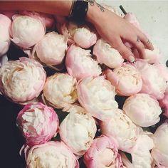 Good morning ⛅️ bloomroomnyc.com 💛 #flowers #florist #floral #flowershop #flowerpower #flowerslovers #bouquet #peonies #pastel #fashion #stylish #style #ordernow #orderflowers #instagood #instagirl #instafashion #instaflowers #instalikes #photooftheday #tagsforlikes #localflorist #brooklynflorist #bloomroom #bloomroomnyc #brooklyn #newyork