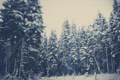 | winter |