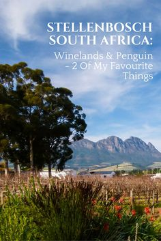 Stellenbosch, South Africa: Winelands & Penguin – 2 Of My Favourite Things