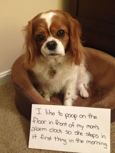 I like to poop on the floor in front of my Mom's alarm clock so she steps in it first thing in the morning. The fact that your Mom posted this says to me that is EXACTLY what she deserves! Cavaliers King Charles are the most sensitive and loving companions God ever created. SHAME ON YOU!