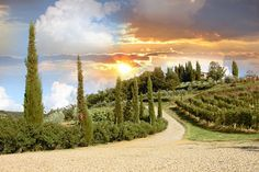 The fact that you probably don't have enough room for a vineyard shouldn't weigh on the actual design. While you may not be able to grow lovely Chianti grapes, you can still take a landscaping approach that brings the lovely Tuscan winery vineyards to you. Sculpted rows of small bushes and a pebble path lined with austere, thin trees can really bring home a taste of Italy.