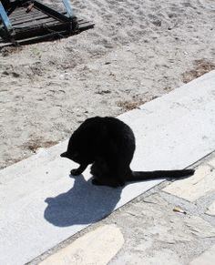 Cats of Nerja