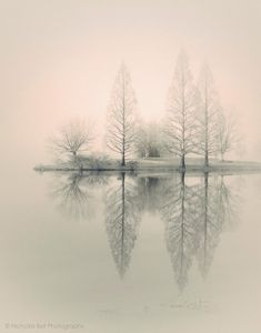 landscape photography, monochromatic, nature, fog, foggy, trees, winter, 8 x 10 print. $50.00, via Etsy.