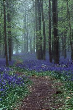 tulipnight: Bluebells in Dockey Wood by Davo77 on Flickr
