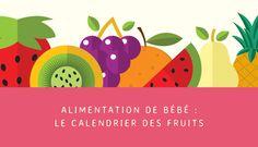 On aimerait cuisiner à bébé des fruits frais en toute saison. Malheureusement c'est rarement possible. Voici la saison des fruits avec un petit calendrier.